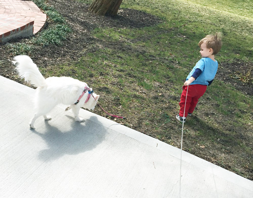 toddler outside with dog
